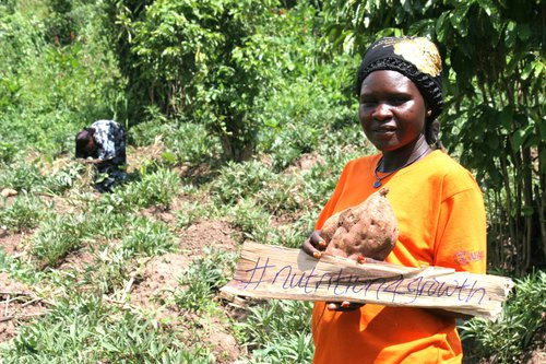 Woman holds harvested sweet potato and a handwritten banner saying #nutrition4growth